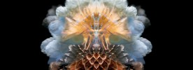 The Aquarius Mix by Hibernation
